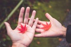 Кленовые листы стоковое фото