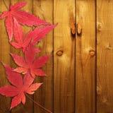 Кленовые листы красного цвета осени Стоковое Изображение RF