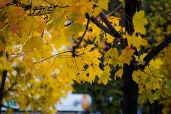 Кленовые листы осени выходят в кленовые листы осени леса осени волшебные стоковая фотография rf