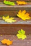 Кленовые листы осени на деревянной лестнице в парке Стоковое Изображение
