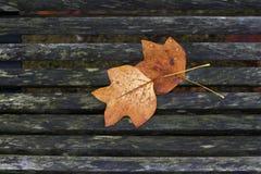Кленовые листы осени цвета differents на стенде Стоковые Изображения