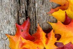 Кленовые листы падения на деревянном столе стоковые изображения rf