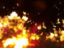 Кленовые листы с запачканным золотым заходом солнца на заднем плане Стоковое Изображение