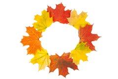 Кленовые листы Стоковые Изображения