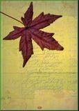 Кленовый лист на предпосылке grunge стоковая фотография rf