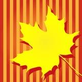 Кленовый лист осени желтый Стоковые Фотографии RF