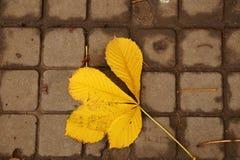 Кленовый лист осени на влажном асфальте Стоковое Изображение RF