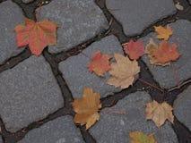 Кленовый лист осени на мостоваой Стоковое Изображение RF