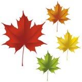 Кленовый лист Стоковое Фото