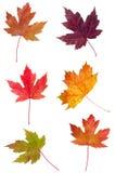 клен листьев ассортимента цветастый стоковые фото