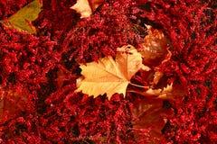 клен листьев крупного плана цветастый Стоковые Изображения
