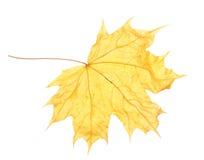 клен листьев осени сухой Стоковые Изображения RF