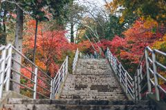 клен листьев осени цветастый Стоковые Фотографии RF