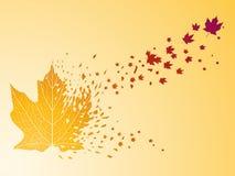клен листьев предпосылки Стоковое фото RF