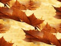 клен 2 листьев Стоковое Изображение RF