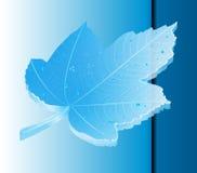 клен 3 листьев Стоковое фото RF