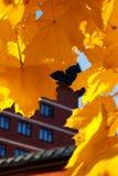 клен leafes дома кирпича ближайше Стоковое фото RF