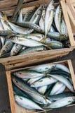Клети свежих рыб стоковое фото rf