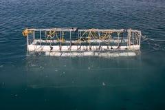 Клетка акулы Стоковые Фотографии RF