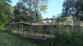 Клетка для обширного размножения индюков Meleagris, фазанов, в касках Numida guineafowl и другой птицы Разводить для сток-видео