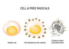 Клетка и свободные радикалы иллюстрация штока