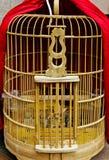 Клетка птицы полета любимца hutch птицы пустой birdcage стоковое изображение