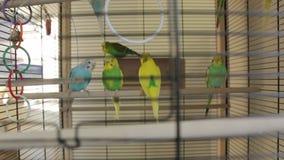 Клетка птицы попугаев видеоматериал
