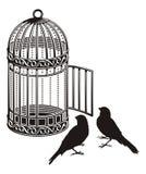 клетка птицы Стоковые Изображения RF