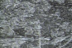 Клетки лука - микроскопическое изображение Стоковое фото RF