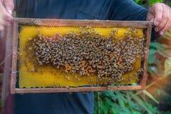 Клетки меда и работая пчелы Стоковая Фотография RF