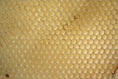клетки опорожняют мед Стоковое Изображение