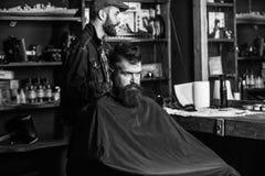Клиент битника получая стрижку Клиент с бородой готовой для уравновешивать или холить Человек при борода покрытая с черной накидк стоковое изображение rf