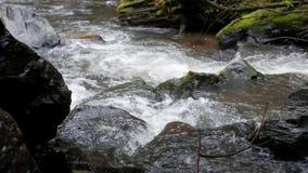 Клокоча поток в Тихом океан северозападе сток-видео