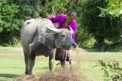 Клонить буйвол Стоковое Изображение