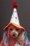 клоун дня рождения Стоковое Фото
