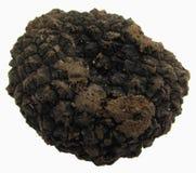 клубень трюфелей черноты одного aestivum стоковые изображения