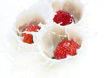 клубника выплеска Стоковая Фотография