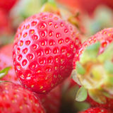 клубника еды крупного плана свежая здоровая естественная Стоковая Фотография RF