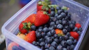 Клубника и голубая ягода Стоковые Фотографии RF