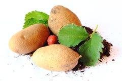 клубника картошек завода Стоковое фото RF
