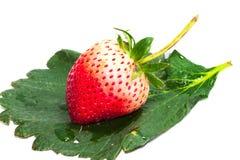 Клубника макроса одиночная красная на лист клубники Стоковые Изображения