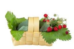 Клубника полесья в корзине изолированной на белизне Стоковые Фото