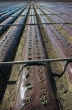 клубника поля Стоковое Изображение RF