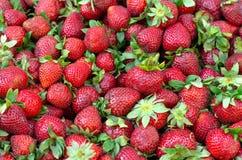 Клубника Свежий органический макрос ягод Предпосылка плодоовощ, Стоковая Фотография