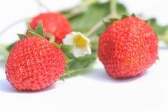 клубника ягод Стоковые Изображения RF