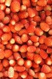 клубника ягод Стоковая Фотография