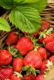 клубника ягод Стоковое Фото