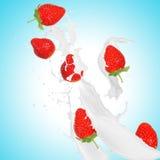 Клубники в выплеске молока Стоковое Изображение RF