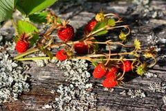клубники десерта Стоковая Фотография RF