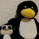 Клуб пингвина Стоковое Изображение